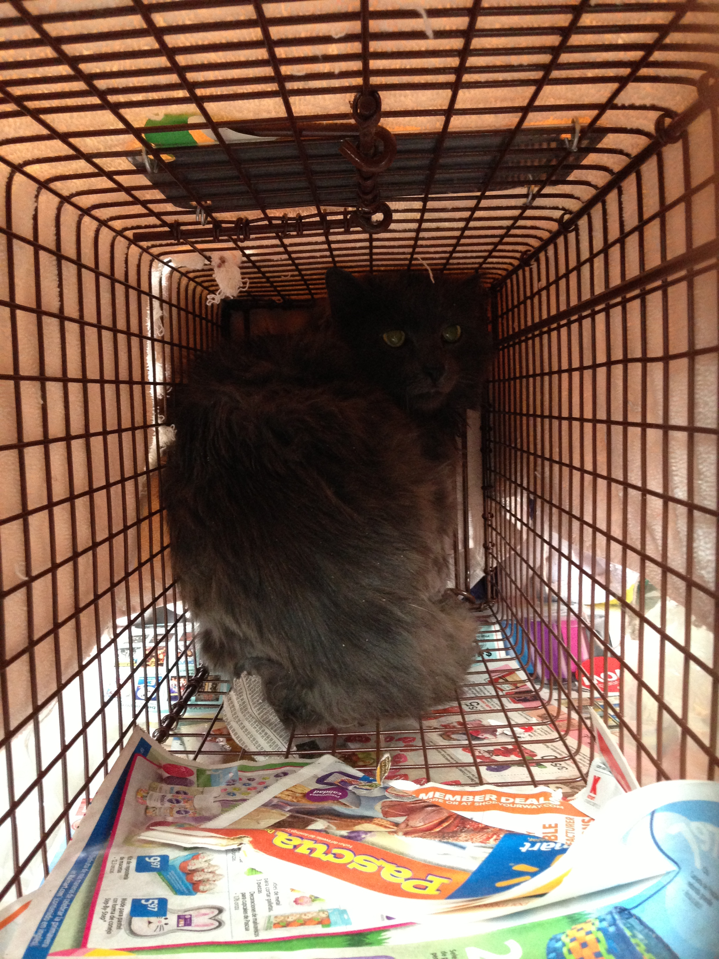 Puffy after being TNR'd