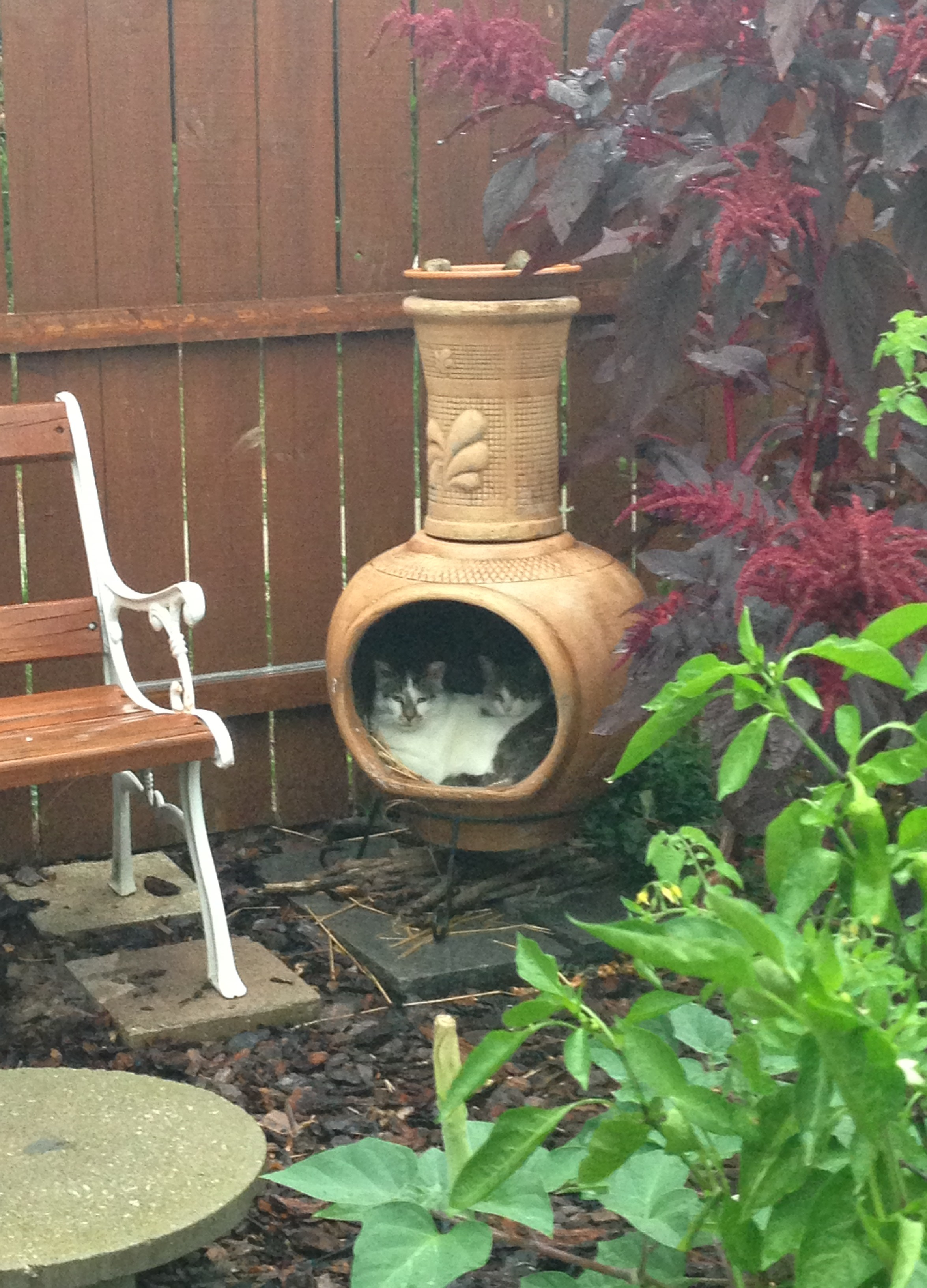 Feral Feeding Station Keeps Cats Dry Cats In My Yard
