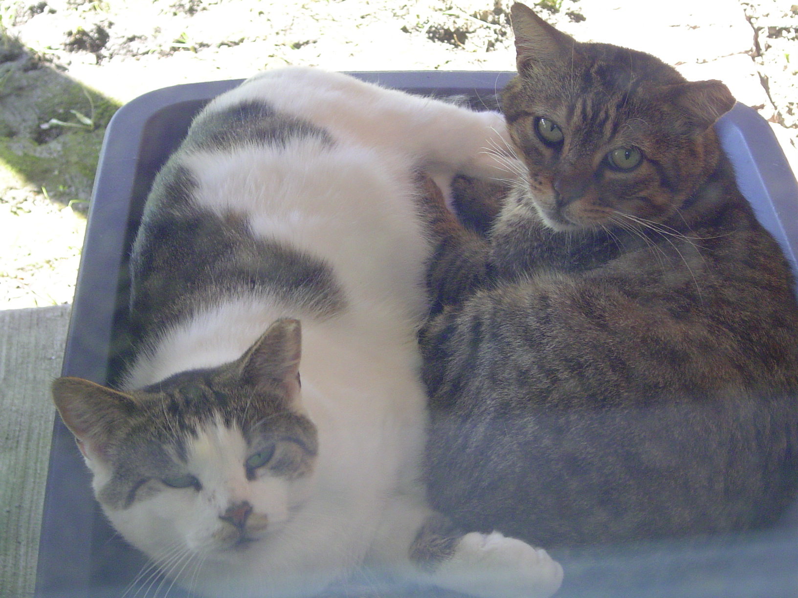 happy national feral cat day remembering the first tnr u0027d cats in