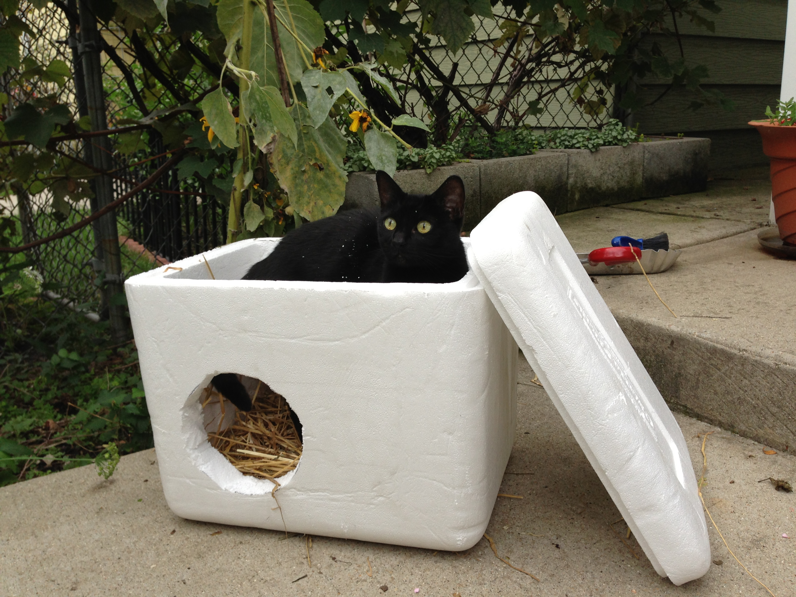 Quick And Easy Ideas For Low Cost Outdoor Cat Shelters